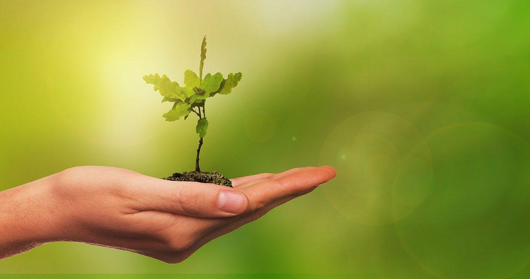 MTS støtter Danmark planter træer
